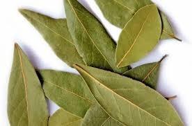 bobkový list - Vavřín vznešený – vypěstujte si vlastní užitečné koření