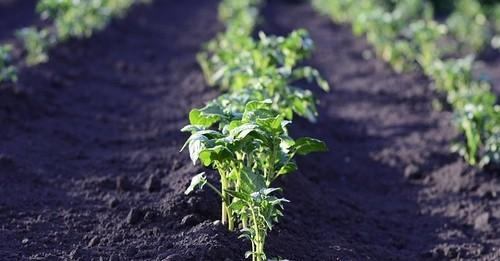 brambory - Jaká může být příprava zahrady v únoru na jarní práce