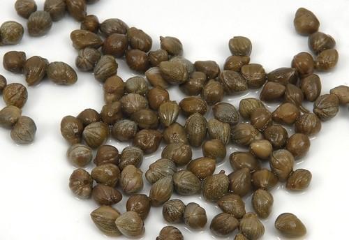 kapary - Kapary nejen jako pochoutka, ale i jako prevence rakoviny