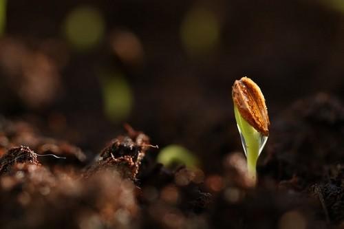 klíčení 1 - Jaká může být příprava zahrady v únoru na jarní práce