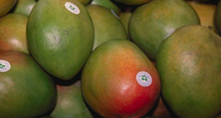 mango ovoce