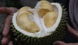 plod durian - Durian – exotické ovoce, ke kterému příliš nečichejte
