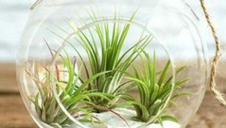 rostlinka 440x250 - sazenicka.cz