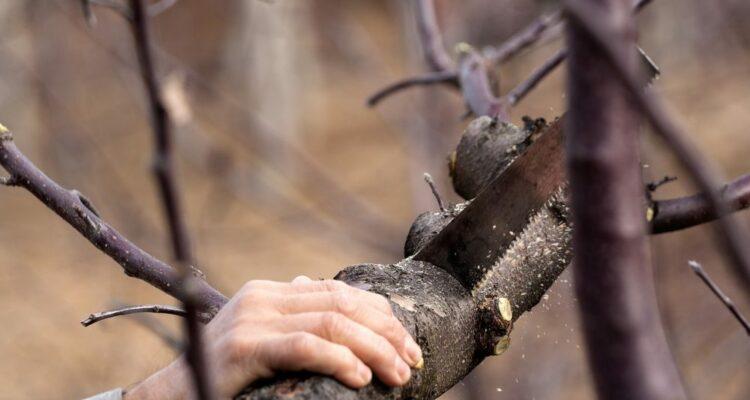 strom řezat