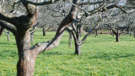 stromy 440x250 - sazenicka.cz