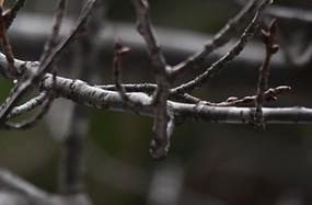 větev 1 - Jak je to s postřiky na zahradě? Proč je nutné čekat na jaro?