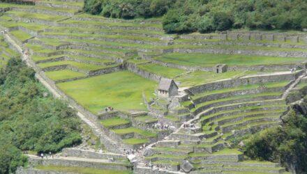 inkové zemědělství