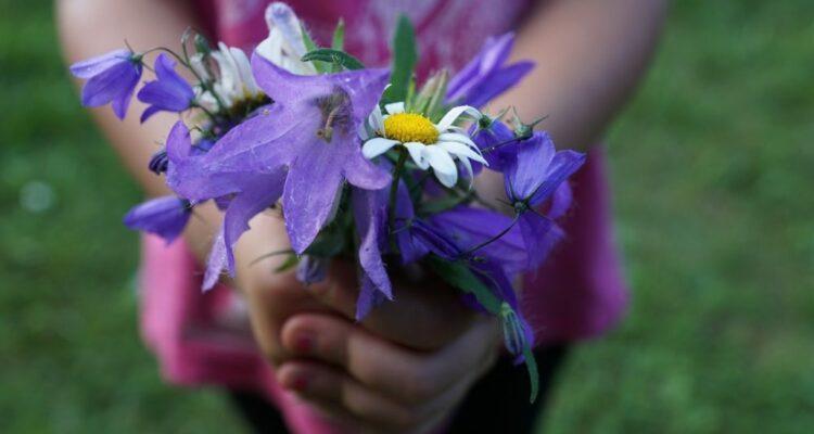 předat květinu