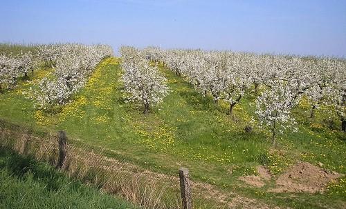plantáž - Jaký typ stromku zvolit na zahradu? Je tu pro vás malý průvodce