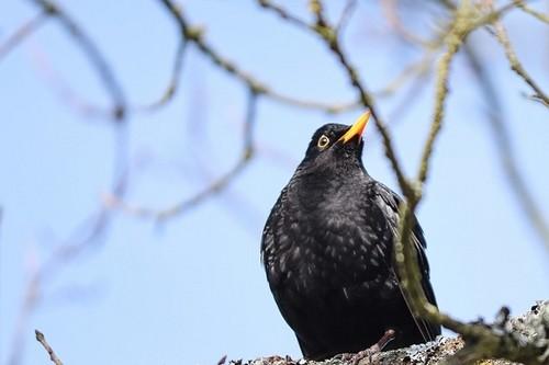 ptáci - Největší škůdci na jaře. Již nyní mohou ohrožovat naši úrodu