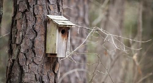 ptačí budka - Vyrábíme ptačí budku. Nejlepší a nejsnazší je vyrobit si budku ze dřeva