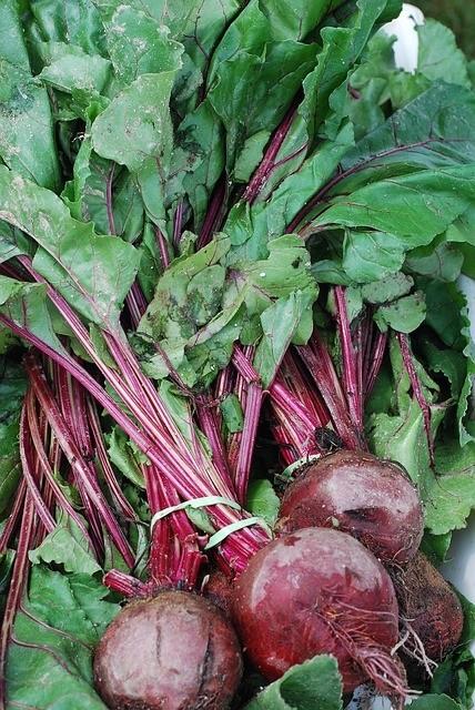 repa - Červená řepa je plná vitamínů a vypěstovat ji na zahradě není problém