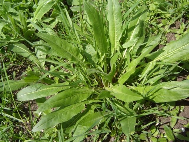 stovik - Salát z jarních bylinek. Co do něho patří?