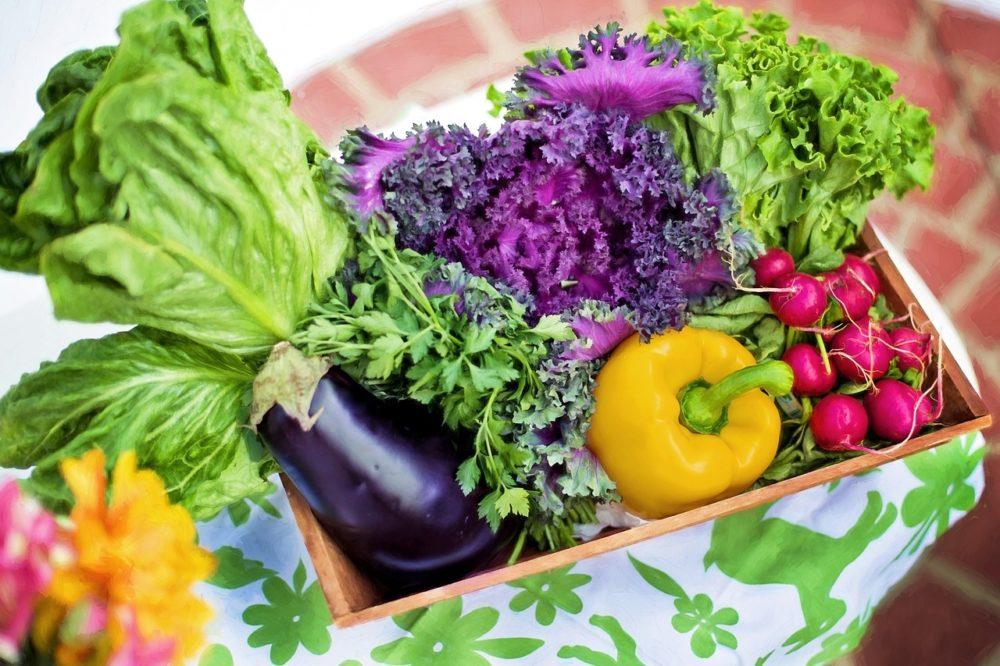 zelenina 1 - Co jste (možná) nevěděli o salátu? Jak chutnal ve starověku, a který nám nejvíce prospívá