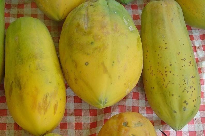 papája - Pěstování papáji je možné i v bytě. Na co si dát pozor