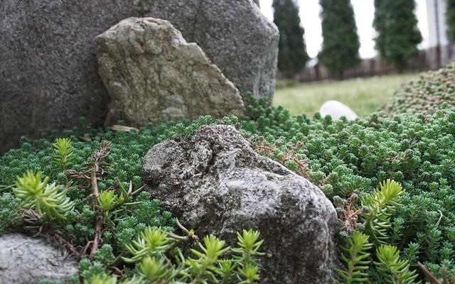 skalka - Kde se na našich zahradách vzaly skalky? Jejich historie není příliš dlouhá