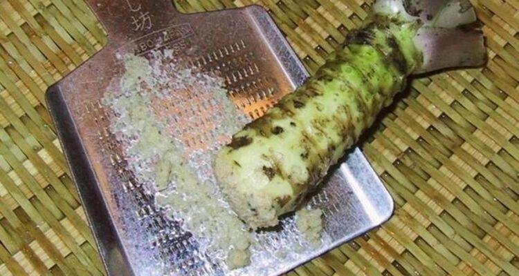 Wasabi kořen