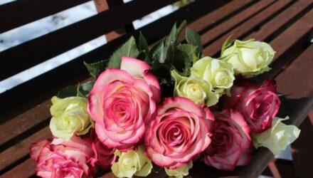 růže 440x250 - sazenicka.cz