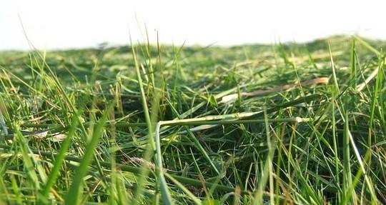 trava - Příliš mnoho posečené trávy? Využijte ji chytře