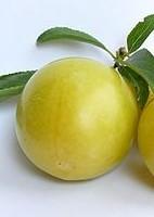bluma plod - Blumy: Opomíjené zdravé a chutné ovoce