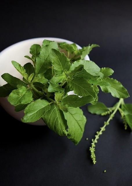 bylinka - Kuchyňské bylinky a co jste o nich nevěděli