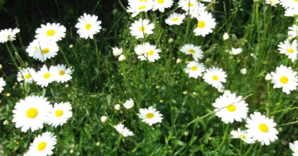 lucni kviti - Které květiny se nejvíc hodí do vázy na stůl
