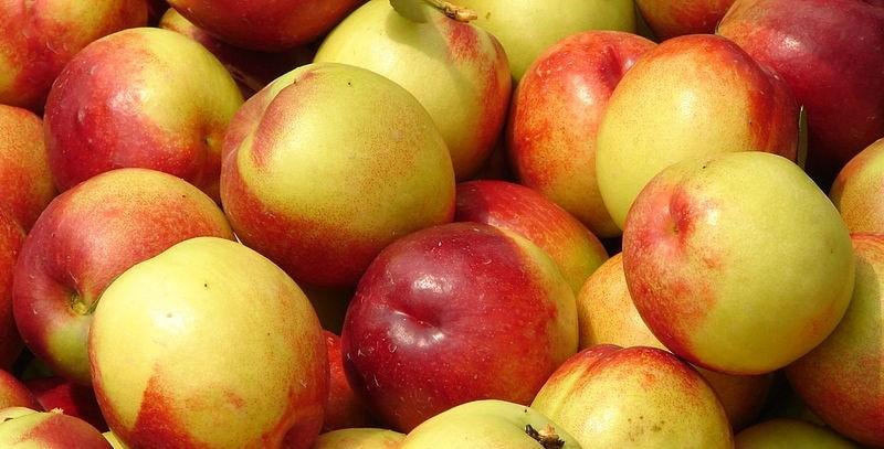 nektarinka - Máte rádi nektarinky? Můžete si pěstovat vlastní i na balkoně