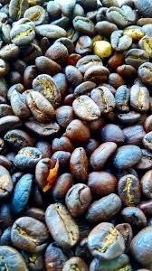 cibetkova kava - Cibetková káva patří mezi nejdražší druhy kávy, čím je výjimečná