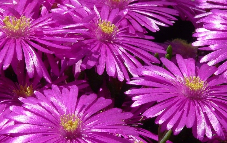 kosmatec - Barevný podzim: Které rostliny pokvetou i v tomto období
