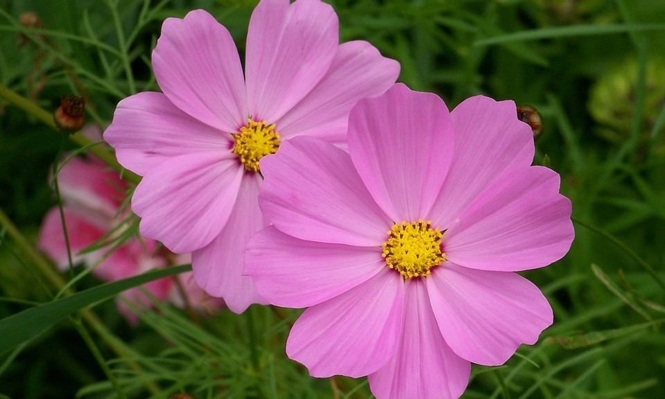 krasenka - Barevný podzim: Které rostliny pokvetou i v tomto období