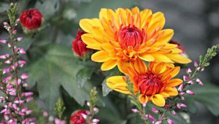 kvete zahrada na podzim t