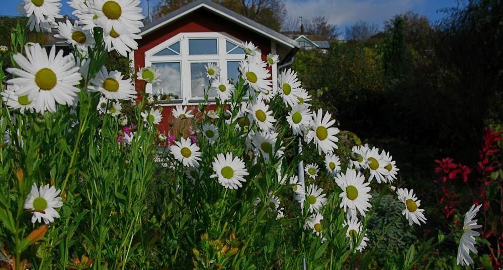 luhovnice pozdni - Podzim může být také rozkvetlý. Které rostliny vybrat