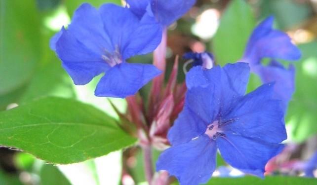 olovenec - Barevný podzim: Které rostliny pokvetou i v tomto období