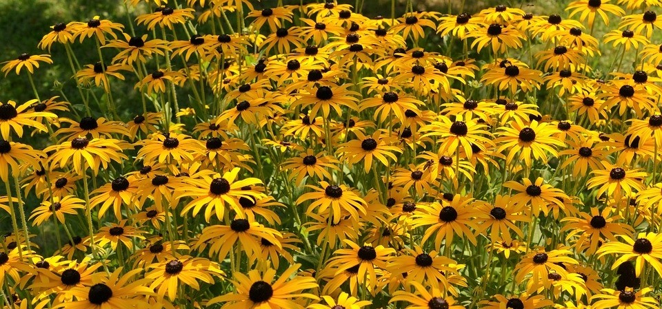 trapatka - Barevný podzim: Které rostliny pokvetou i v tomto období