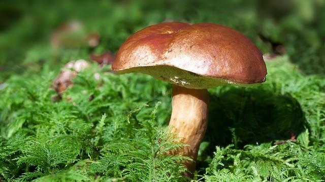 houby 1 - Sušení v sušičce. Jakou vybrat a co je vhodné sušit