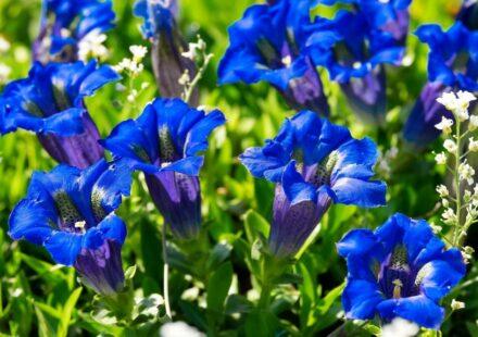 modre rostliny
