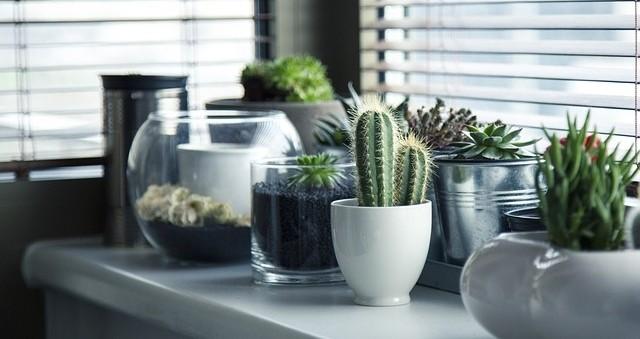 pokojove rostliny - Po létě je potřeba přenést letněné pokojovky zpět domů. Jak na to, abyste jim nezpůsobili šok