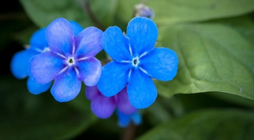 pupkovec jarni - Modrá v zahradě? Sáhněte po těchto rostlinách