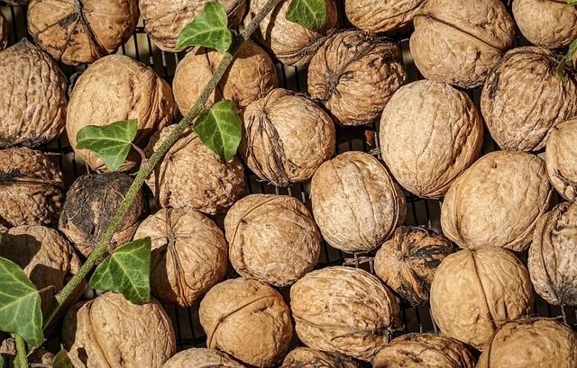 orechy 1 - Zásobárna receptů z ořešákového listí, skořápek a slupek