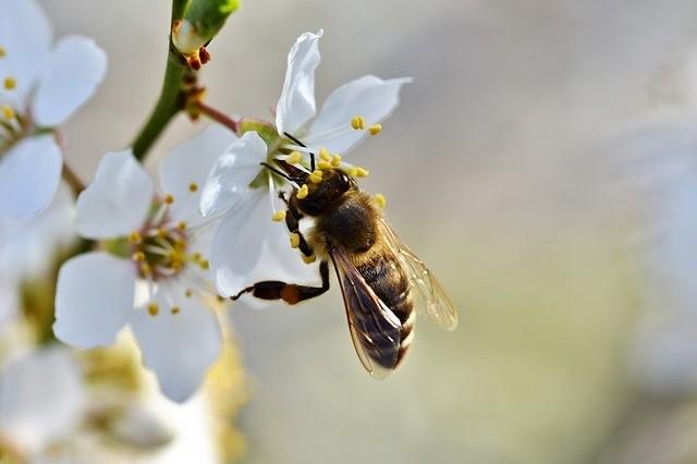 vcela - Přírodní stínění úlů? Vysadit ho musíte už na podzim