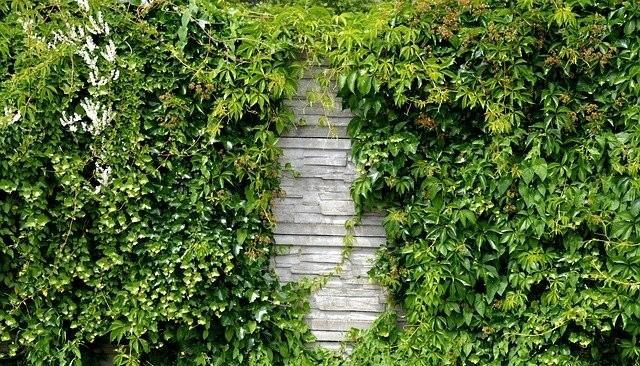 Kombinovany ploty - Řešíte plot kolem pozemku? Jaké jsou možnosti