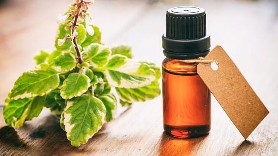Tea tree olej - Domácí dezinfekce nejen ze zahrádky. Máte ji doma