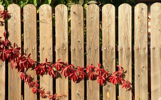 dreveny plot - Řešíte plot kolem pozemku? Jaké jsou možnosti