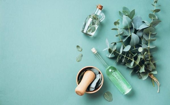 eucalyptus - Domácí dezinfekce nejen ze zahrádky. Máte ji doma