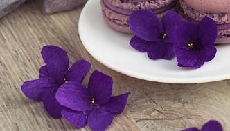 kvety violky - Co si lze připravit z bylinky violky vonné