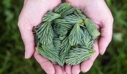 strom - Bylinky na imunitu, které vám rostou za humny právě teď