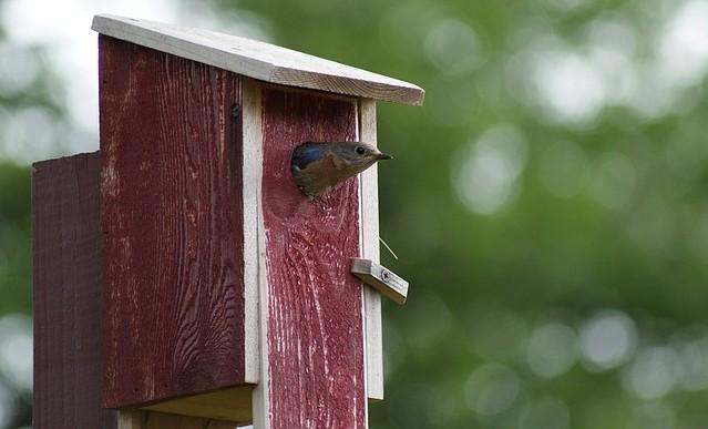 budka - Jak vyrobit budky pro různé druhy ptáků