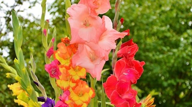 meciky - Co všechno potřebuje vaše okrasná zahrada během dubna