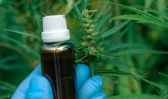 olej z konopi - Konopí seté - zajímavá a léčivá rostlina