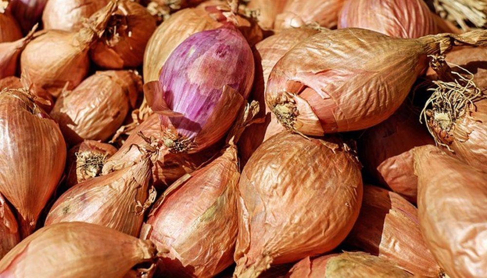salotka - Pěstovat šalotku je jednodušší než pěstovat klasickou cibuli